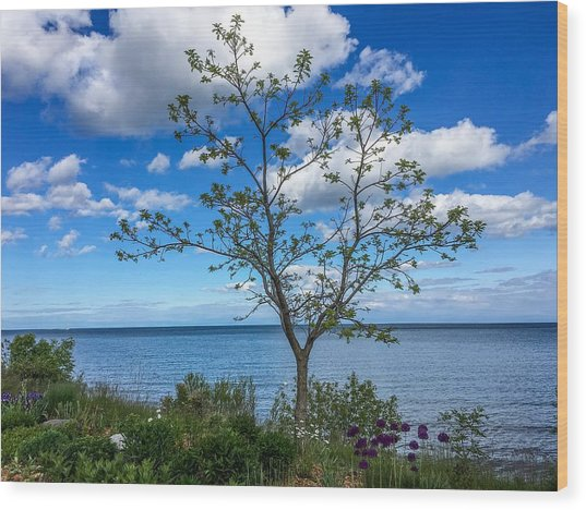 A Walk Along Lake Michigan Wood Print