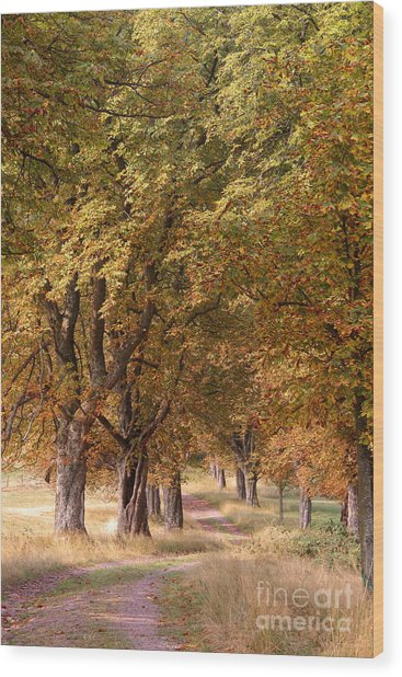 A Walk In The Countryside Wood Print