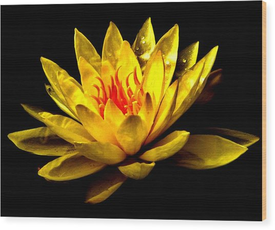 A Water Lily Wood Print