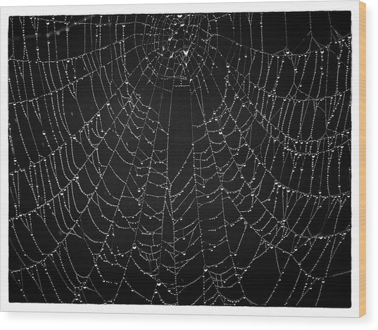 A Web Of Silver Pearls Wood Print