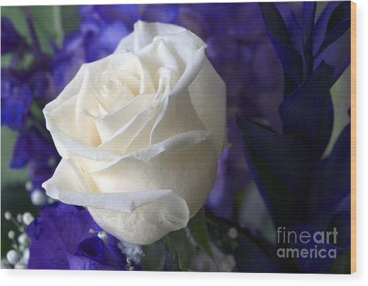 A White Rose Wood Print