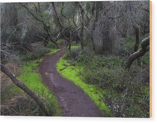 A Windy Path Wood Print