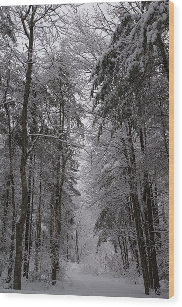 A Winters Path Wood Print