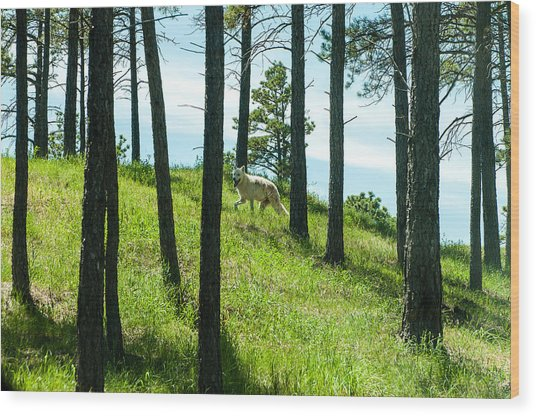Wood Print featuring the photograph A Wolf Among The Trees  by Rosemary Legge
