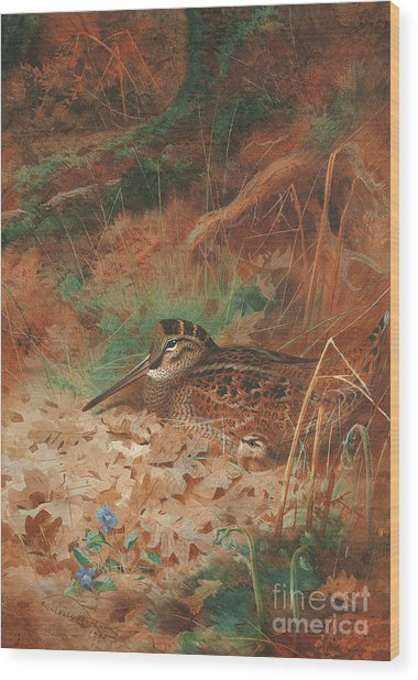 A Woodcock And Chick In Undergrowth Wood Print