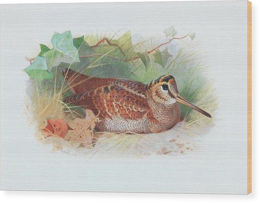 A Woodcock Resting Wood Print