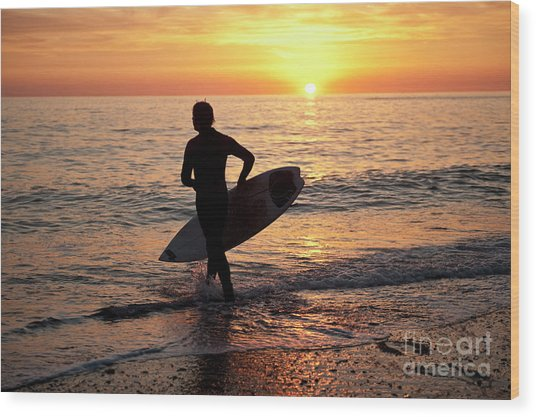 A Young Man Surfing At Sunset Off Aberystwyth Beach, Wales Uk Wood Print