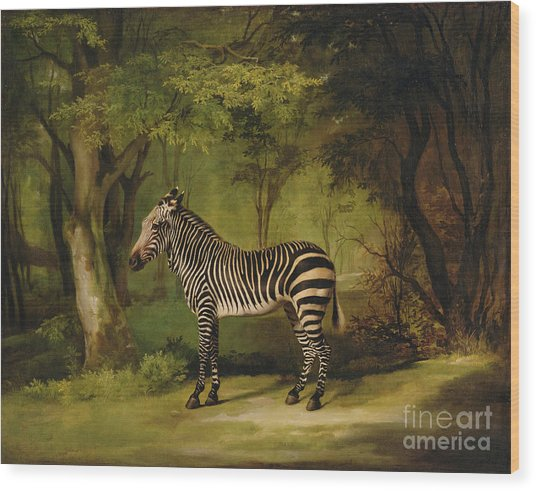 A Zebra Wood Print