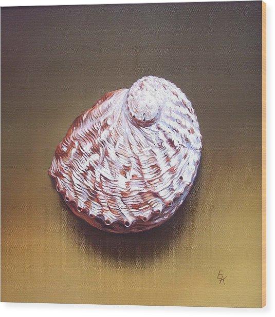 Abalone Shell - B Wood Print by Elena Kolotusha