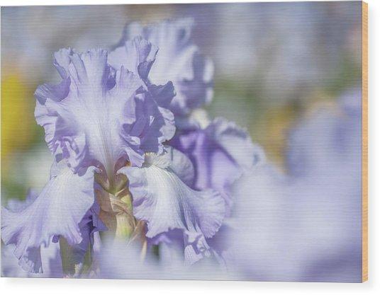 Absolute Treasure 1. The Beauty Of Irises Wood Print