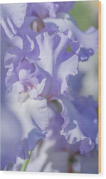 Absolute Treasure Closeup 2. The Beauty Of Irises Wood Print