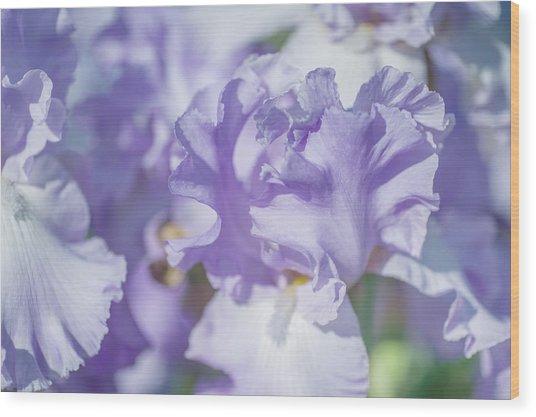 Absolute Treasure Closeup. The Beauty Of Irises Wood Print