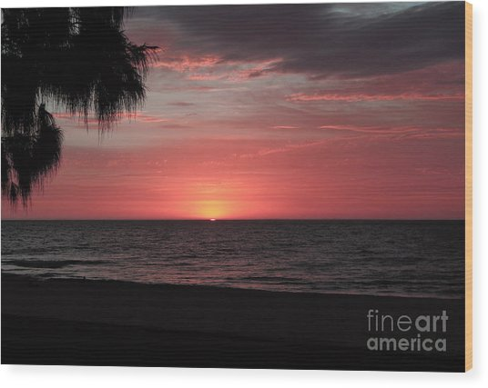 Abstract Beach Palm Tree Sunset Wood Print