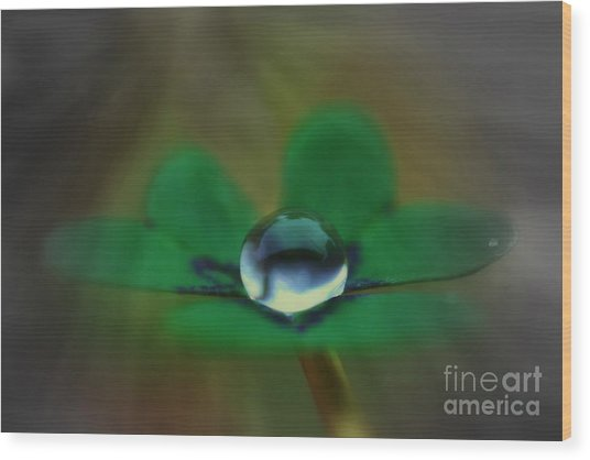 Abstract Clover Wood Print