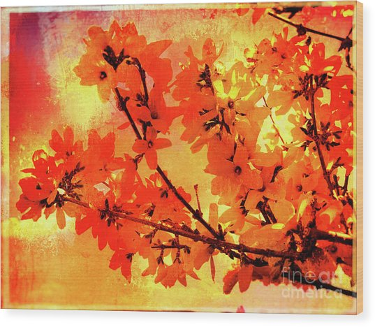 Abstract Forsythia Flowers Wood Print
