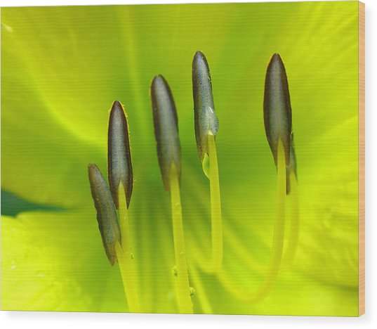 Abstract Lily Flower Wood Print by Juergen Roth