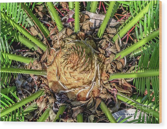 Abstract Nature Tropical Fern 2096 Wood Print
