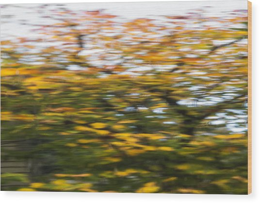 Abstract Of Maple Tree Wood Print