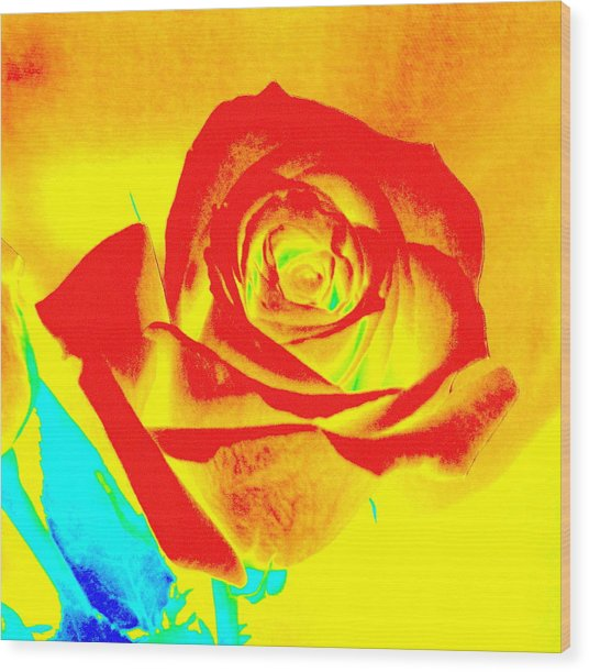 Single Orange Rose Abstract Wood Print