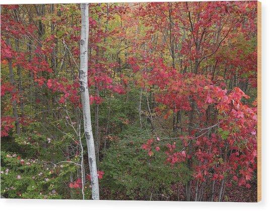 Acadia Fall Colors Wood Print