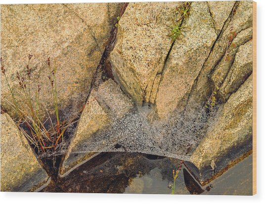 Acadia Granite With Spiderweb And Grasshopper Photo Wood Print by Peter J Sucy