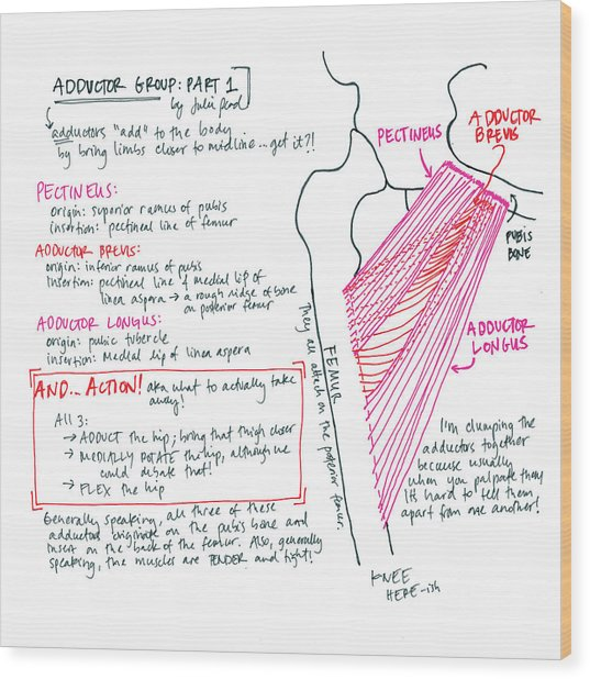 Adductor Group Part 1 Wood Print