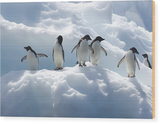 Adelie Penguins Lined Up On An Iceberg Wood Print