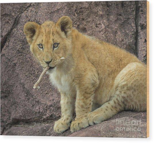 Adorable Lion Cub Wood Print