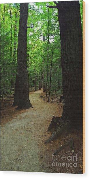 Adventures Wood Print