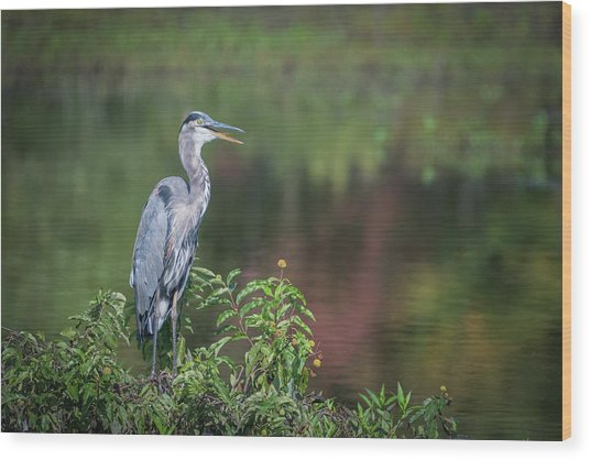 Wood Print featuring the photograph Advice From A Great Blue Heron by Cindy Lark Hartman