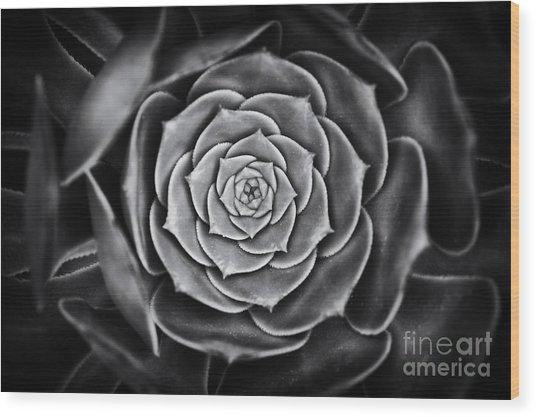 Aeonium Arboreum Wood Print