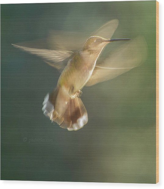Aerial Dancing.... Wood Print