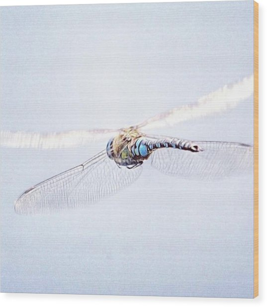 Aeshna Juncea - Common Hawker In Wood Print