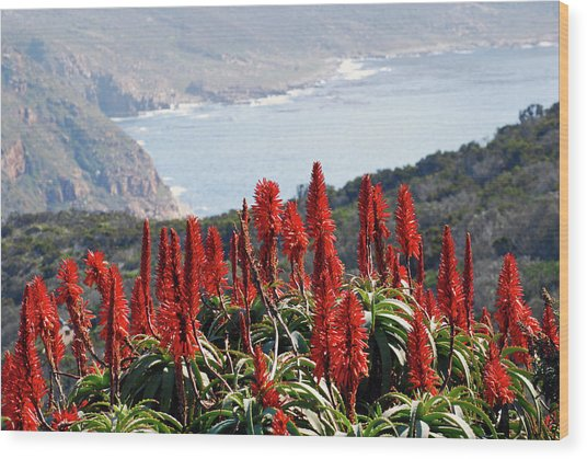 African Aloe And False Bay Wood Print