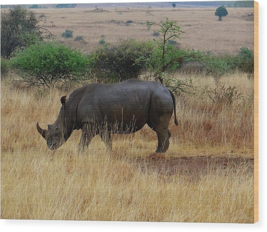African Animals On Safari - One Very Rare White Rhinoceros Right Angle With Background Wood Print