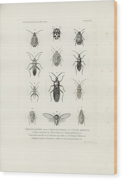 African Bugs And Insects Wood Print