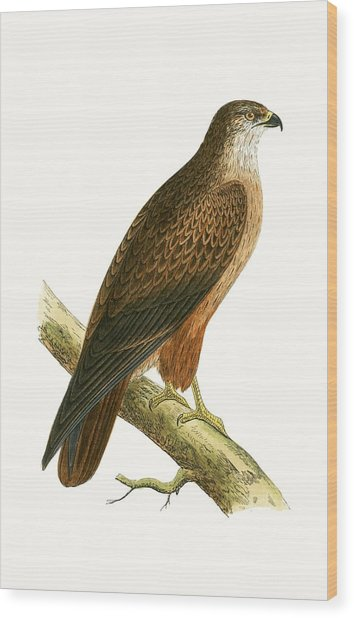 African Buzzard Wood Print