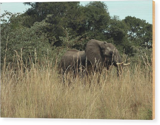 African Elephant In Tall Grass Wood Print