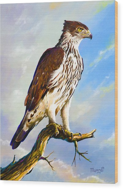 African Hawk Eagle Wood Print