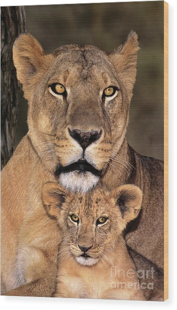 Wood Print featuring the photograph African Lions Parenthood Wildlife Rescue by Dave Welling