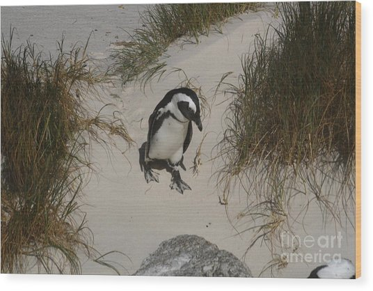 African Penguin On A Mission Wood Print