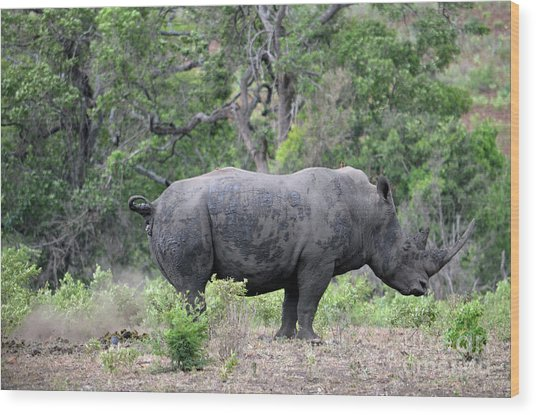 African Safari Naughty Rhino Wood Print
