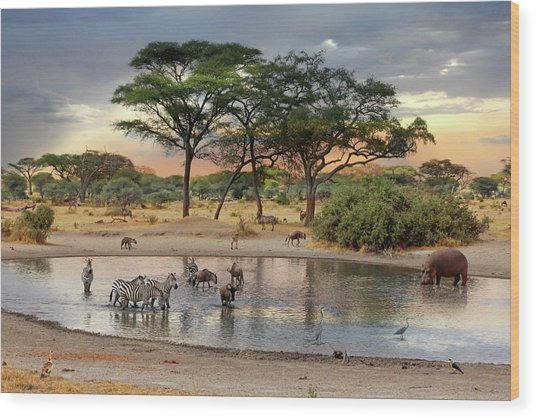 African Safari Wildlife At The Waterhole Wood Print