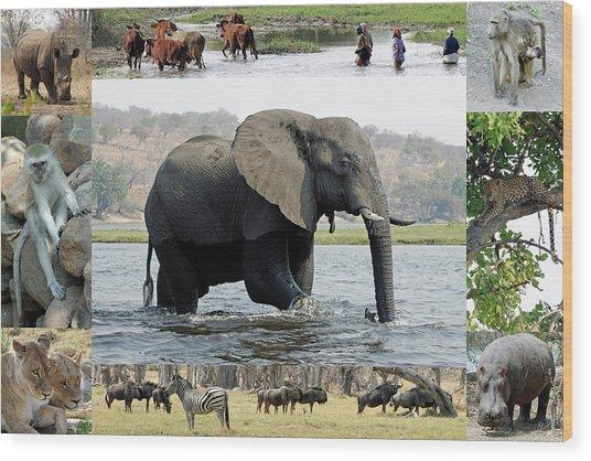 African Wildlife Montage - Elephant Wood Print