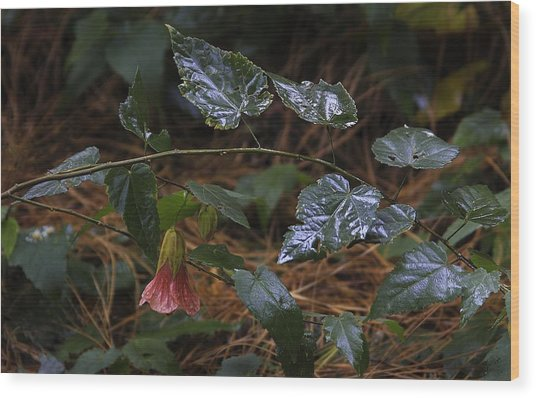After Rain. Souvenir De Bonn. Wood Print by Viktor Savchenko