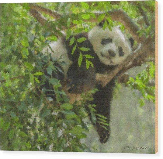 Afternoon Nap Baby Panda Wood Print