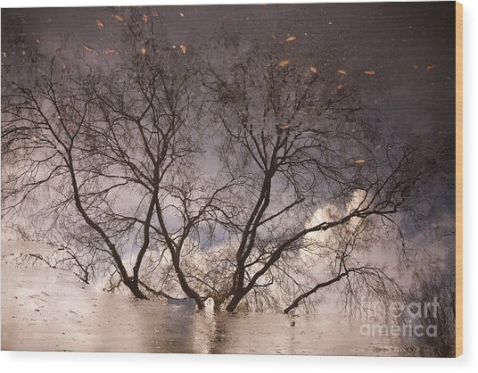 Afternoon Reflection Wood Print by Derek Selander