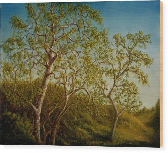 Afternoon Sycamores Wood Print by Lance Anderson
