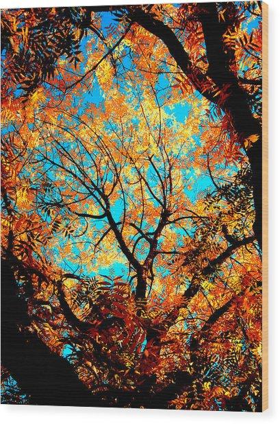 Afternoon Wood Print by Tim Tanis
