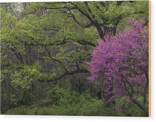 Afton Virginia Spring Red Bud Wood Print